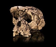 Fossil Hominin