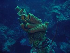 sponge-
