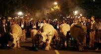 Perayaan Kirab Kebo Bule
